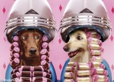 стрижка собак на дому