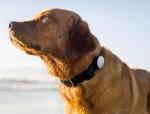 Whistle, услуги ветеринаров
